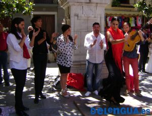Flamenco_x